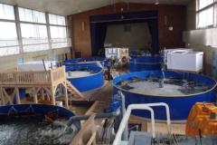 アミタ(株)、岡山県西粟倉村で、ニホンウナギの養殖場に対して、持続可能な養殖方法を検討することを目的に、独自の基準案に基づくパイロット審査を実施します。 5月17日の審査の様子をメディア公開!